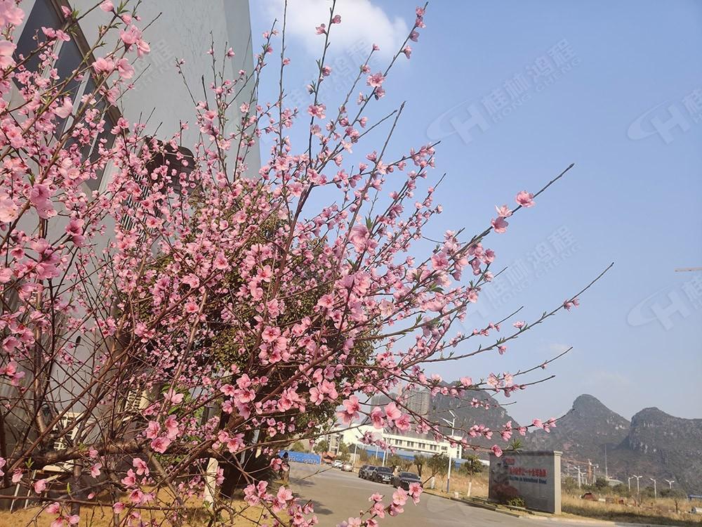 春来到,欢迎您来广西桂林鸿程机械厂考察参观赏花